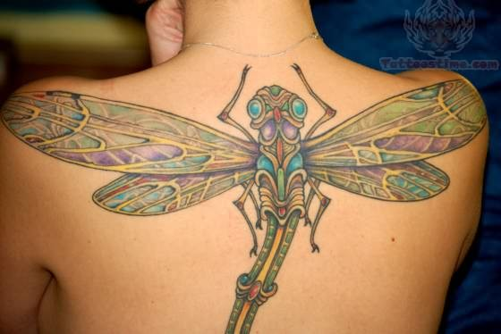 Chubby dragonfly tattoo