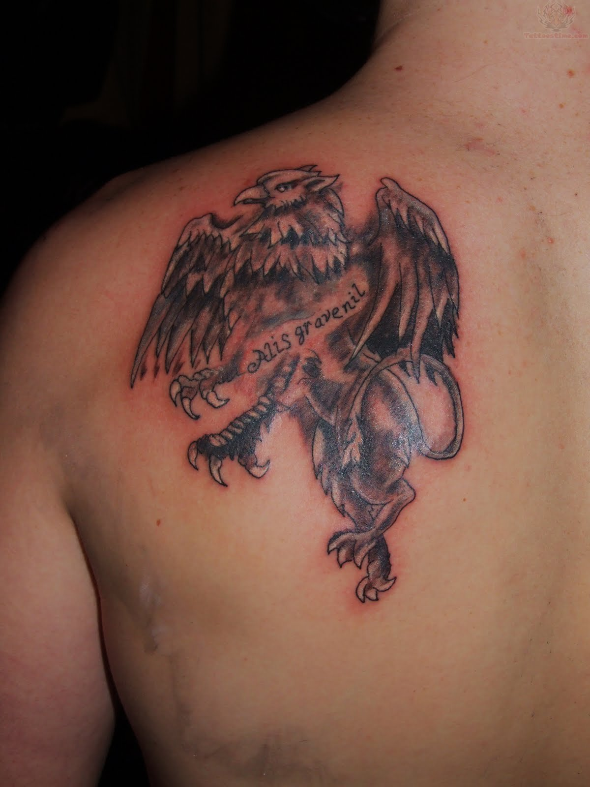 Griffin Tattoo On Back Shoulder