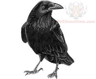 crow tattoos page 41. Black Bedroom Furniture Sets. Home Design Ideas