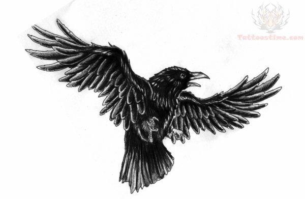 ravens on pinterest crows crow tattoos and raven art. Black Bedroom Furniture Sets. Home Design Ideas