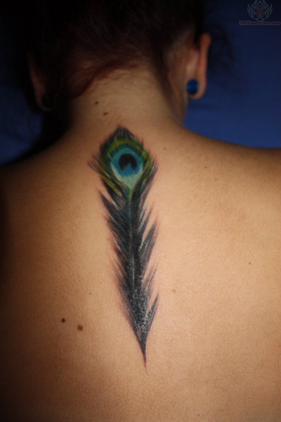 Color Peacock Feather Tattoo