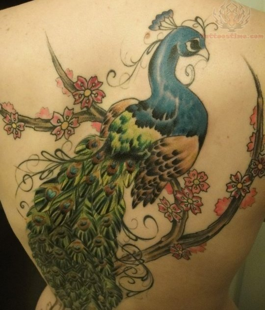 Peacock tattoo on back body for Peacock back tattoo