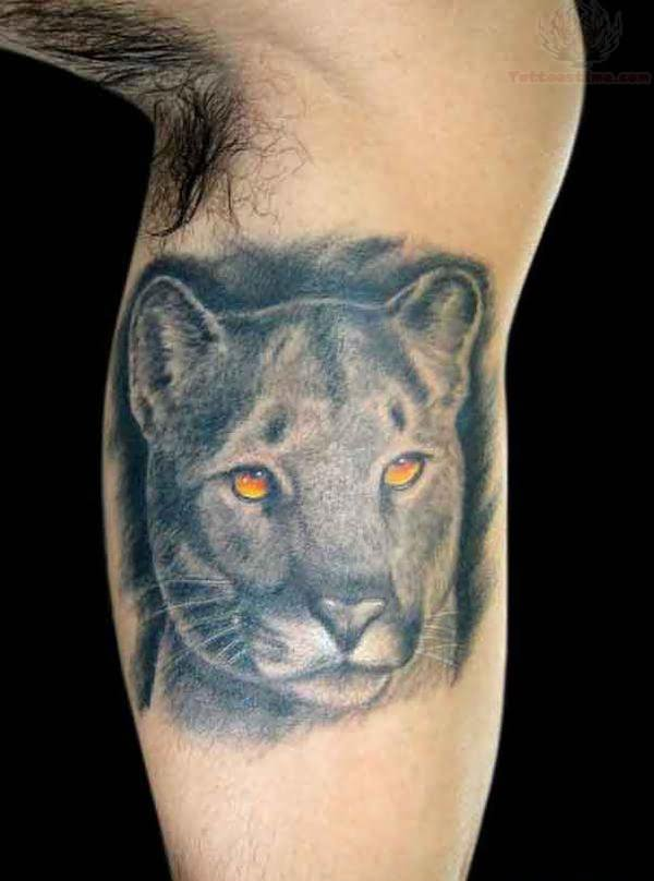 Puma Tattoo Images Amp Designs