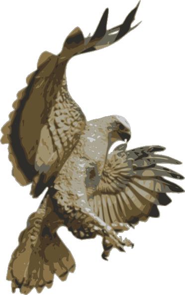 Cartoon Hawk Flying Red tail hawk, flying hawk and