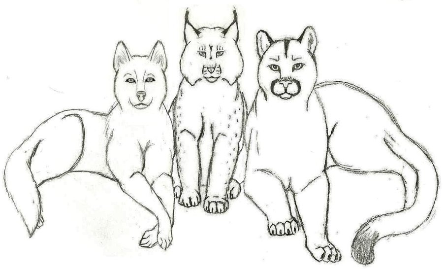 Wolf, Lynx, Cougar Tattoo Designs