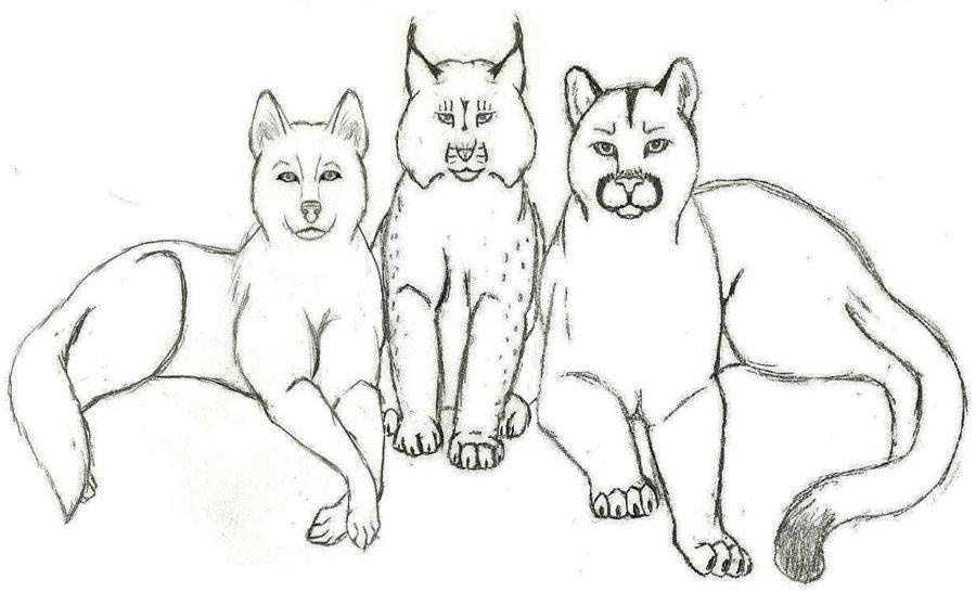 Wolf, Lynx, Cougar Tattoo Designs