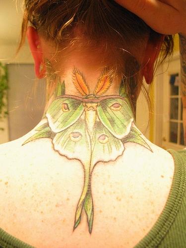 Cicada chest tattoo