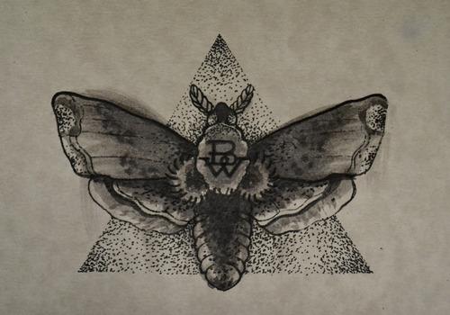 Moth drawing - photo#19
