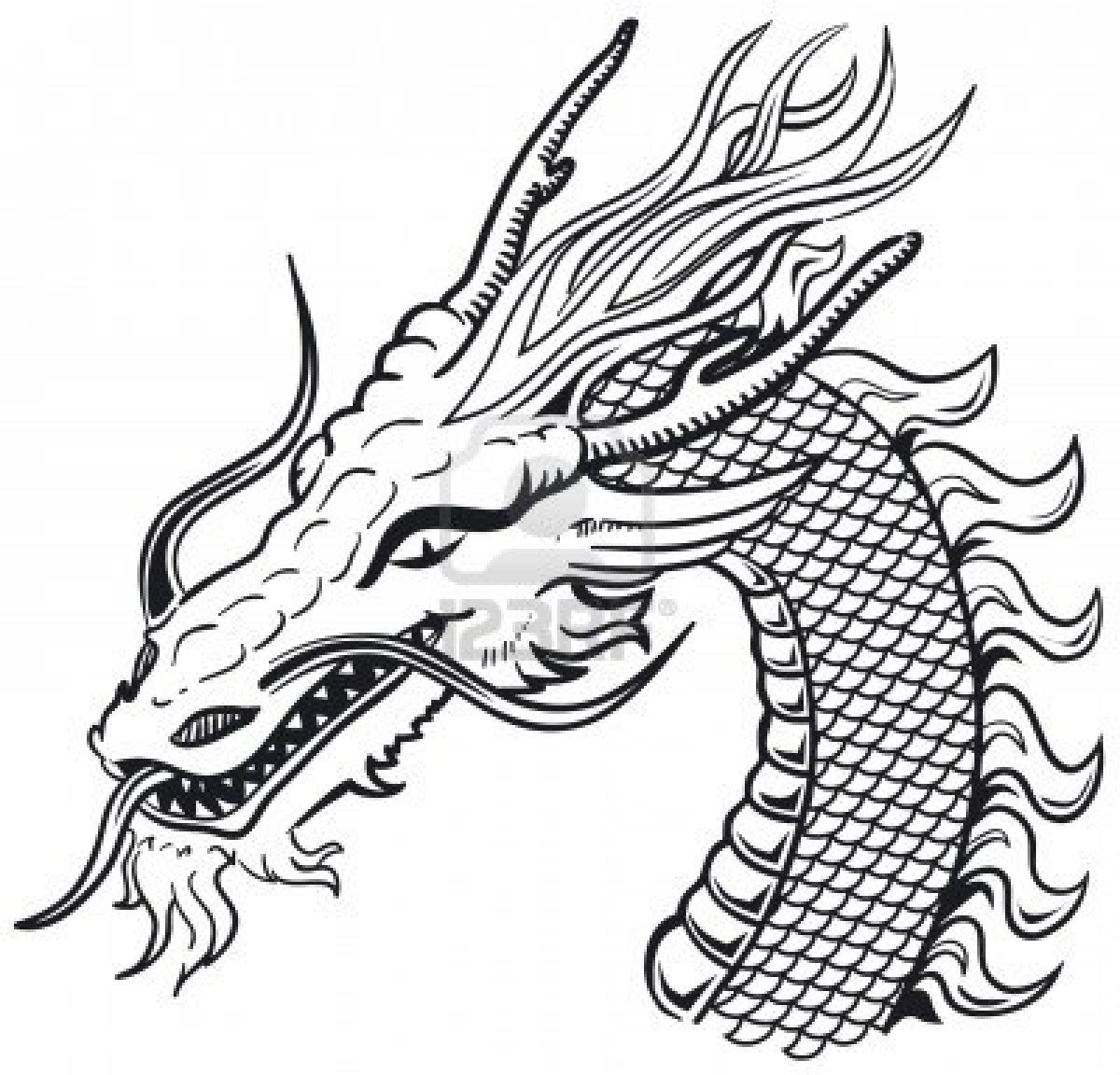 Chinese Dragon Head Tattoo Images amp Designs