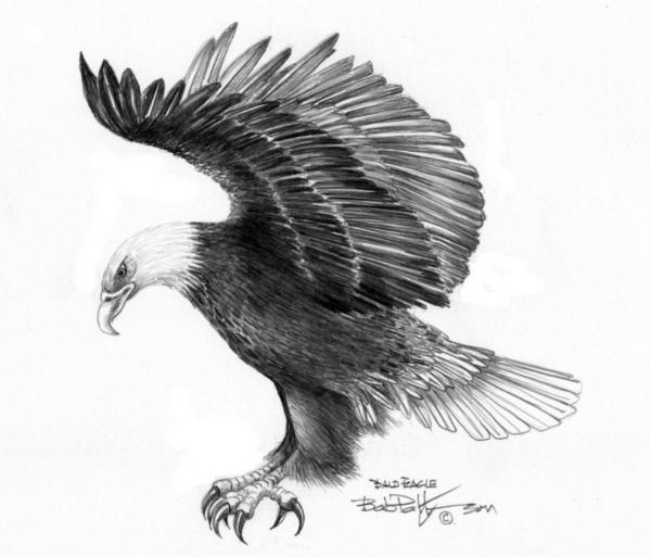 Eagle Wings Tattoo Design