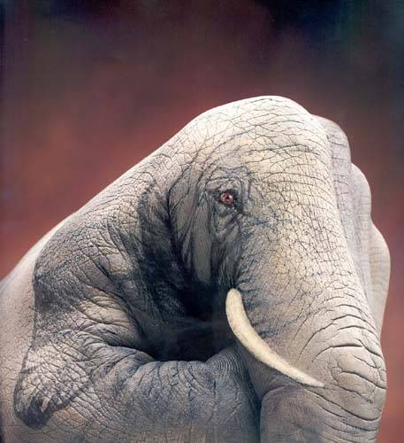 beautiful elephant face tattoo on hand and finger