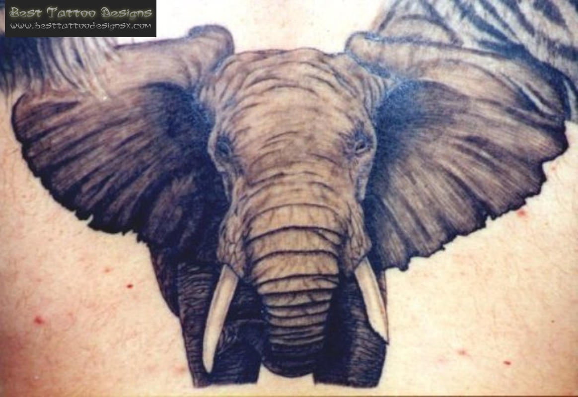 Angry Elephant Tattoos Images Tattoo Source