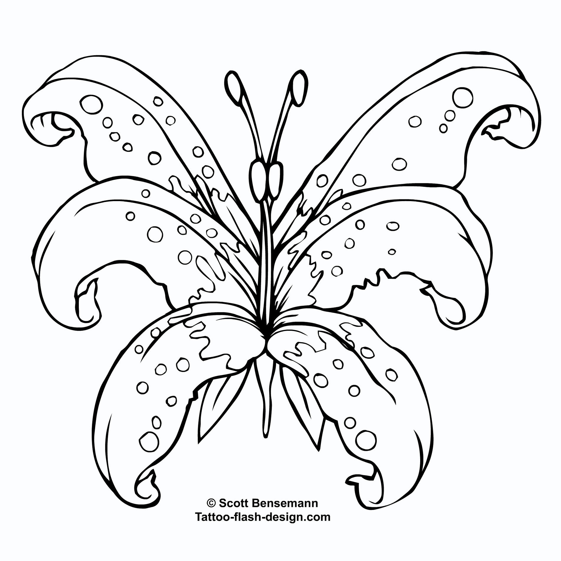 Grey and white lily flower tattoo design awesome lily flower tattoo design izmirmasajfo Choice Image