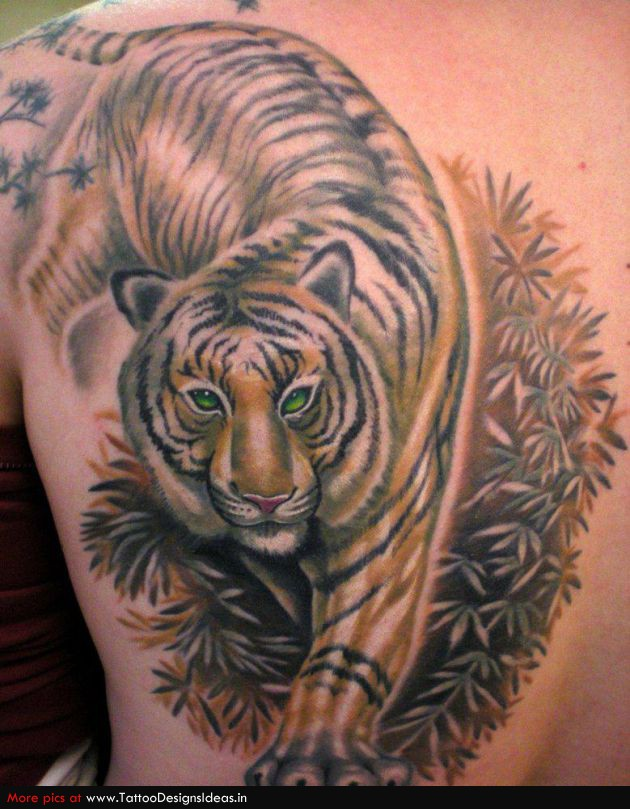 Beautiful color ink tiger tattoo on back body for Beautiful body tattoo