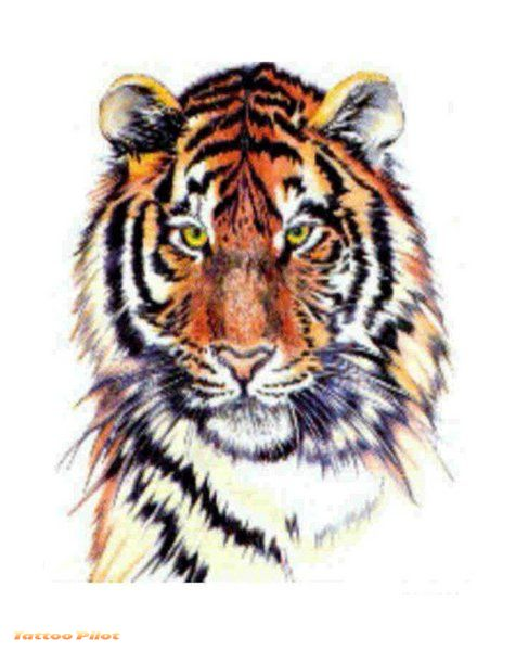 Tiger Tattoo Images & Designs