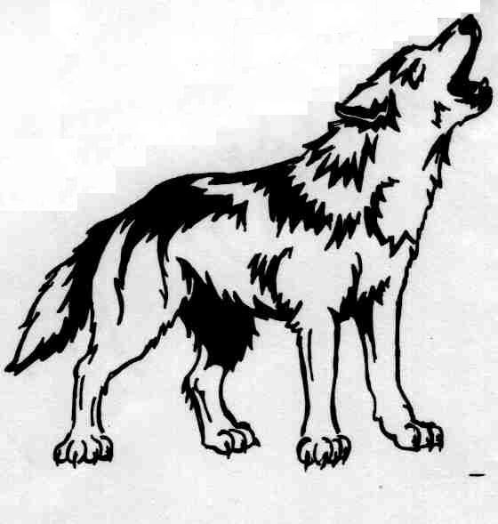 Attractive Black Tribal Wolf Tattoo On Right Back Shoulder