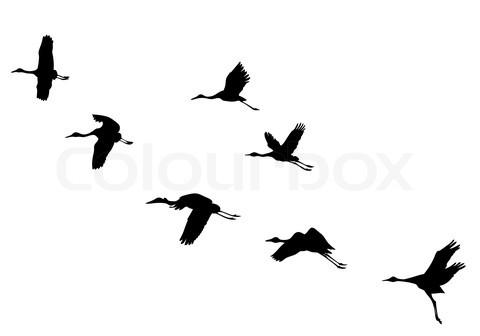 Crane Tattoo Images &a...