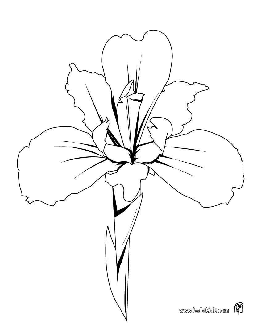 Outline iris flower tattoo design izmirmasajfo