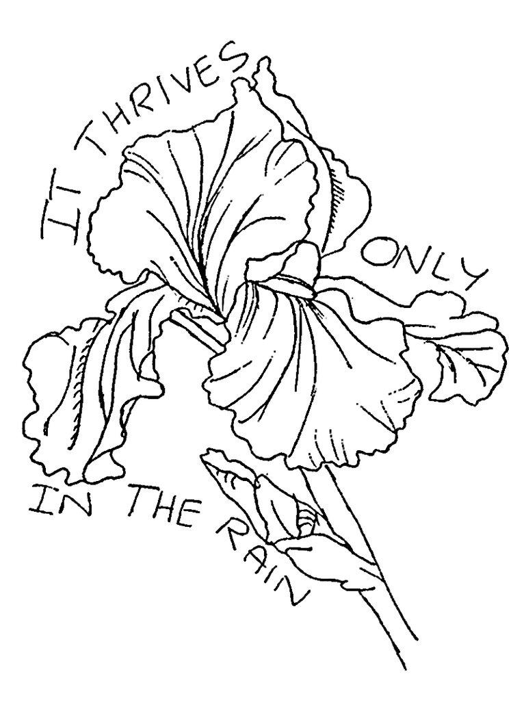 Outline iris flower tattoo izmirmasajfo Images