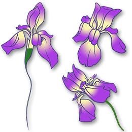 1a25dd43c Purple Ink Iris Flowers Tattoo Design