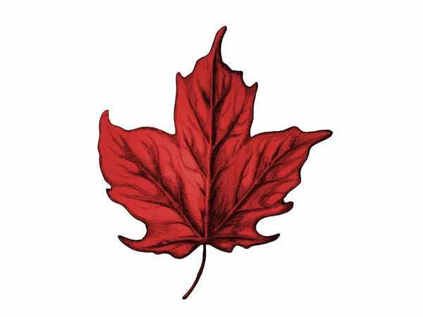 Leaf Tattoo Images Designs