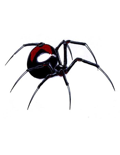 Color Black Widow Spider Tattoo Design