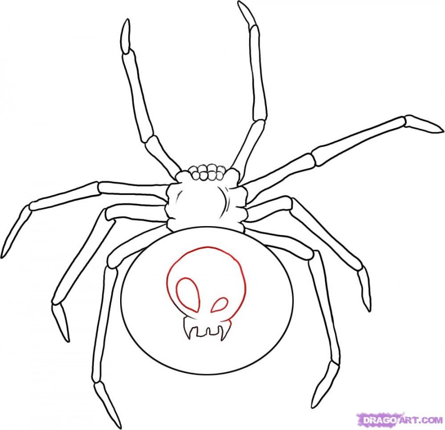 Spider Tattoo Images Designs