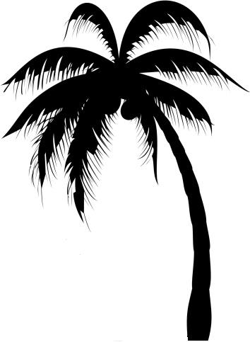 Palm Tree Tattoo Images &amp Designs