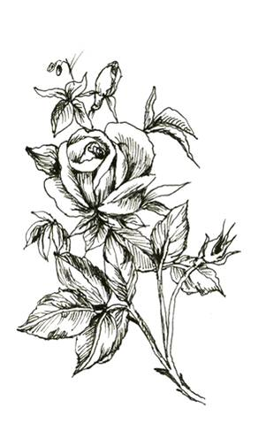 Red rose flower and black tribal tattoo design attractive black and white rose flower tattoo design mightylinksfo