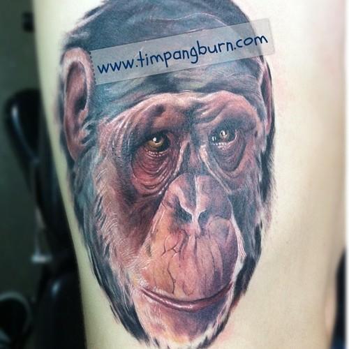Realistic Shy Chimpanzee Tattoo