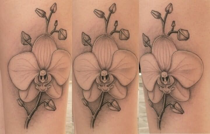 Grey Orchid Flowers Tattoos