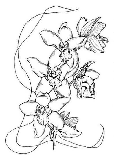 orchid tattoo images designs. Black Bedroom Furniture Sets. Home Design Ideas