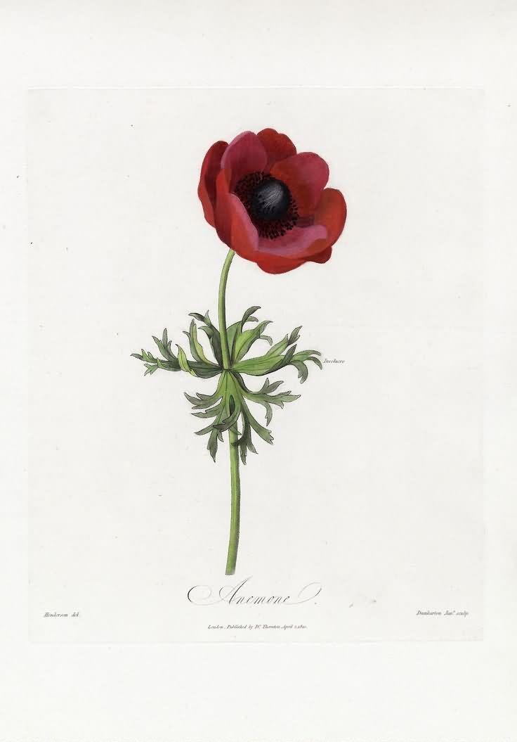 Attractive red poppy flower tattoo design mightylinksfo