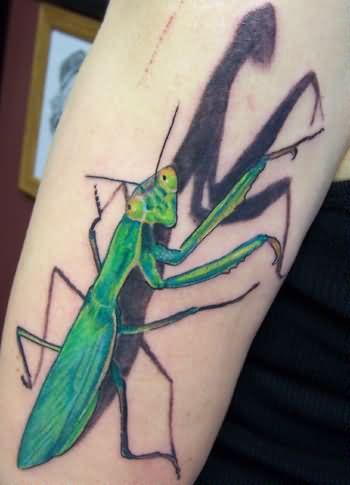 Mantis Tattoo Images Designs