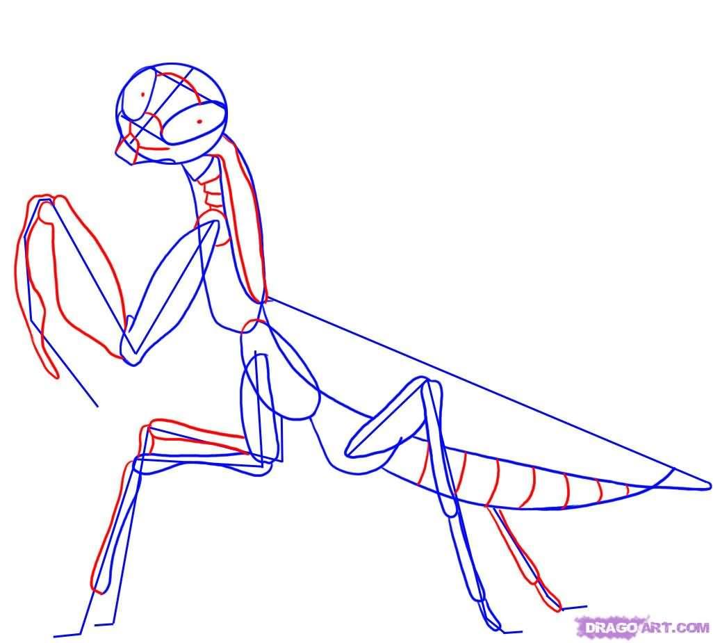 Outline Mantis Tattoo Design