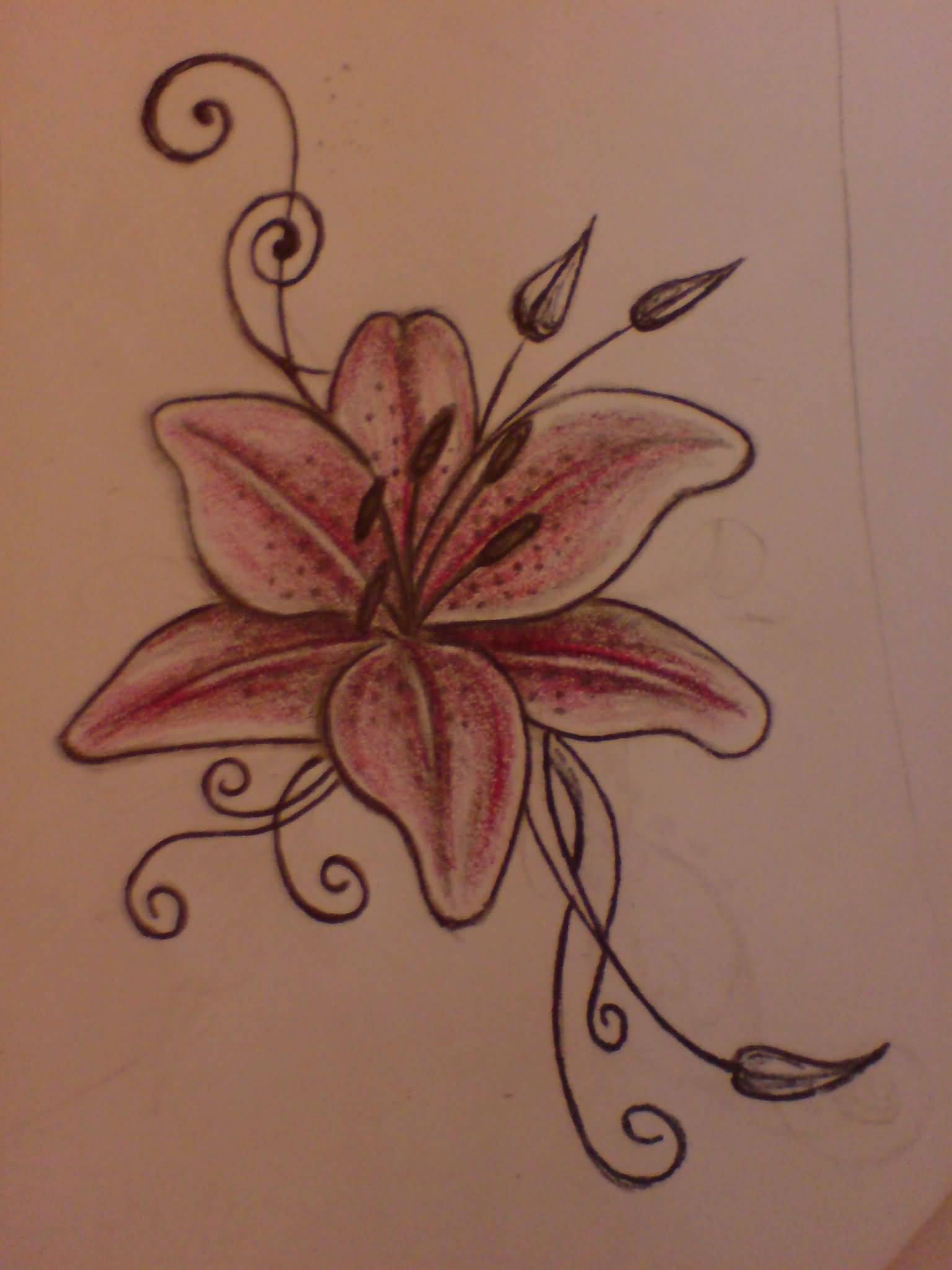 Lily Tattoo Images Designs