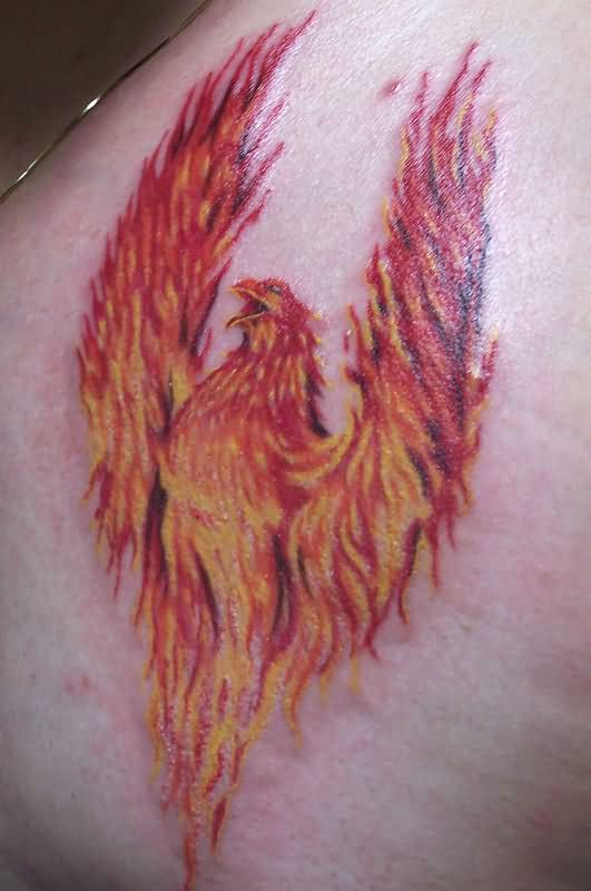 Amazing Flaming Phoenix Tattoo on Phoenix Bird Drawings