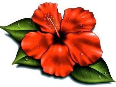 Hawaiian Flower Tattoo Designs for Women