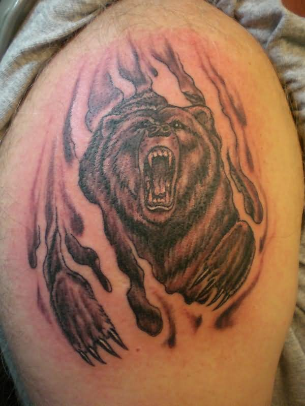 Angry Bear Tattoo On Right Shoulder