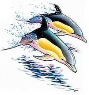 Grey n Yellow Dolphin Tattoo Design