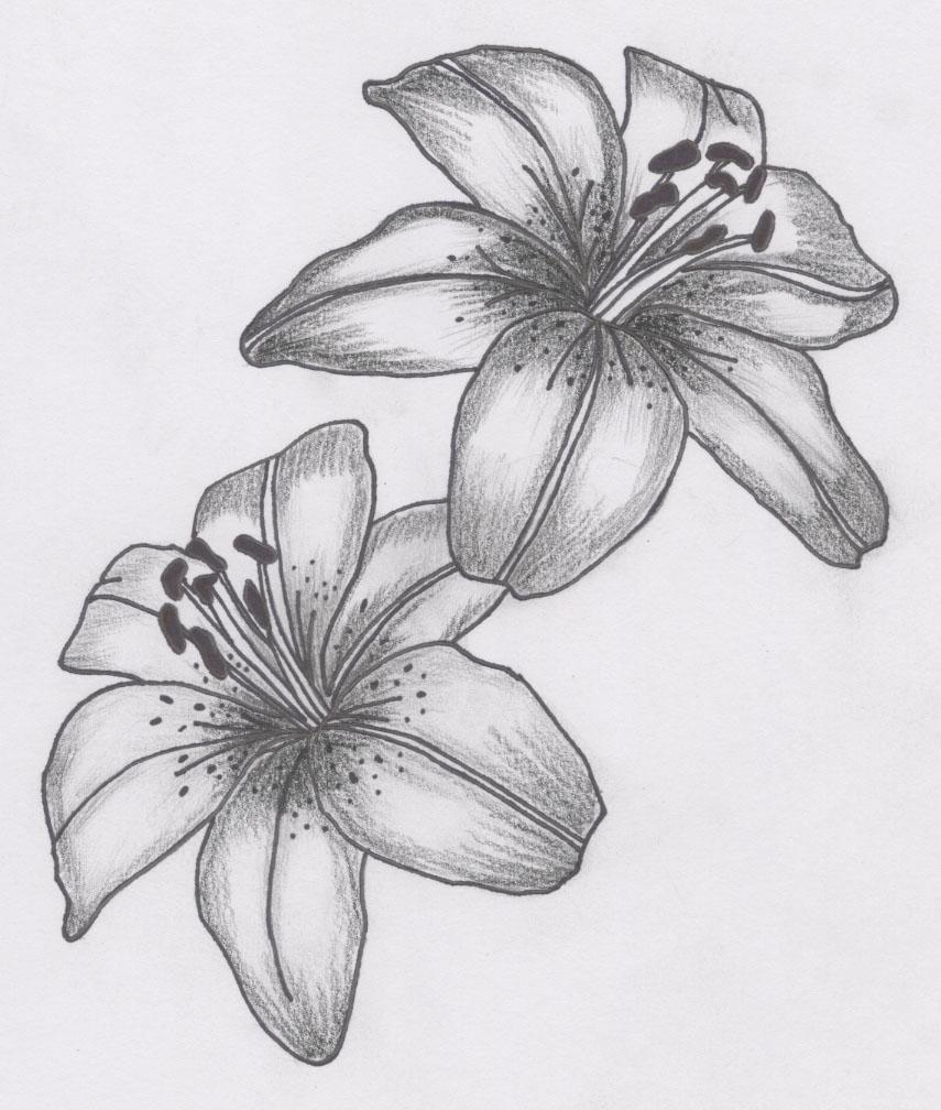 Grey and white lily tattoos designs izmirmasajfo