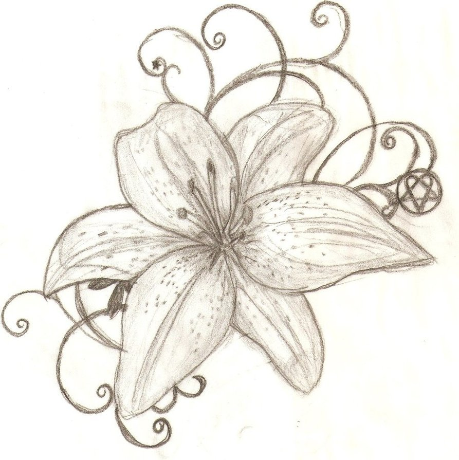 Lily Tattoo Line Drawing : Lily tattoo images designs