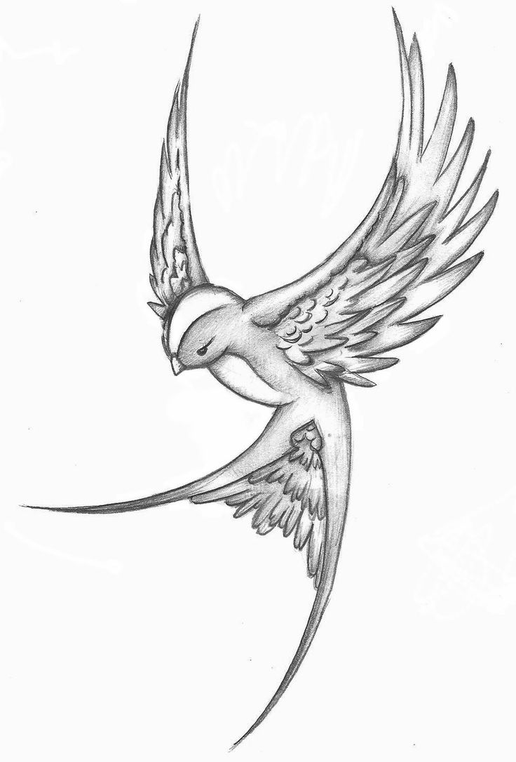 swallow tattoo images designs