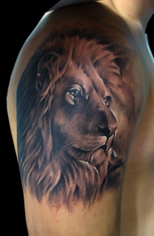 Realistic Lion Tattoo On Right Shoulder
