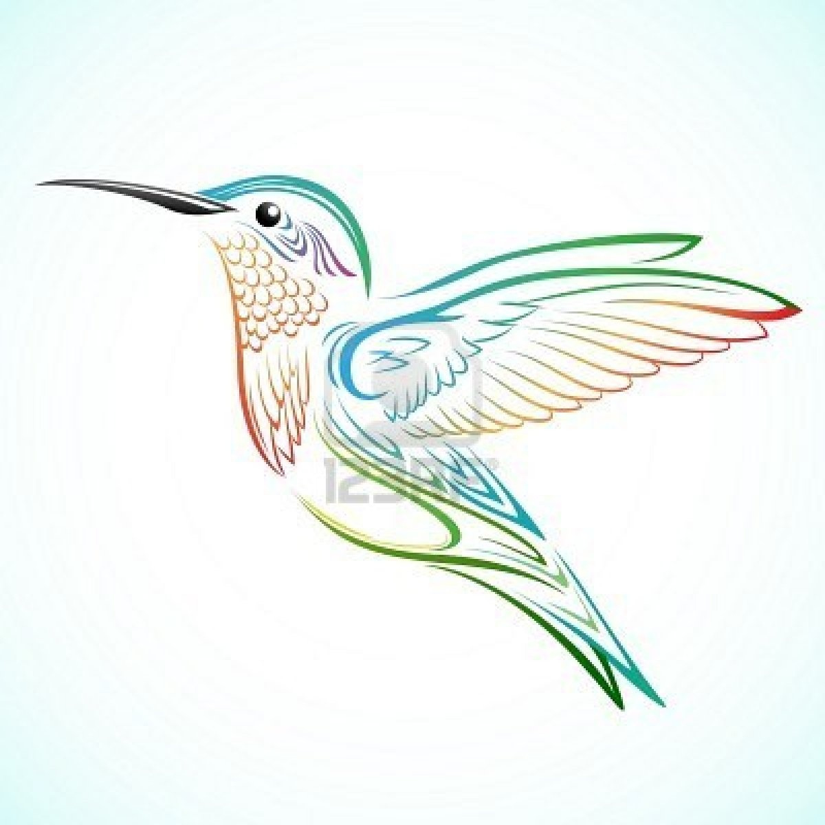Hummingbird Tattoo Images amp Designs