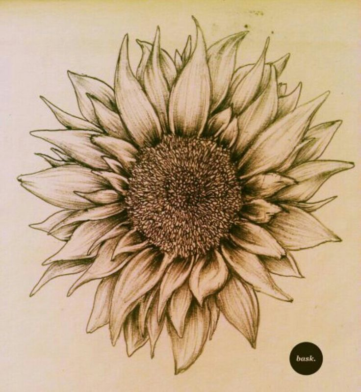 Nice Sunflower Tattoo Design Sample
