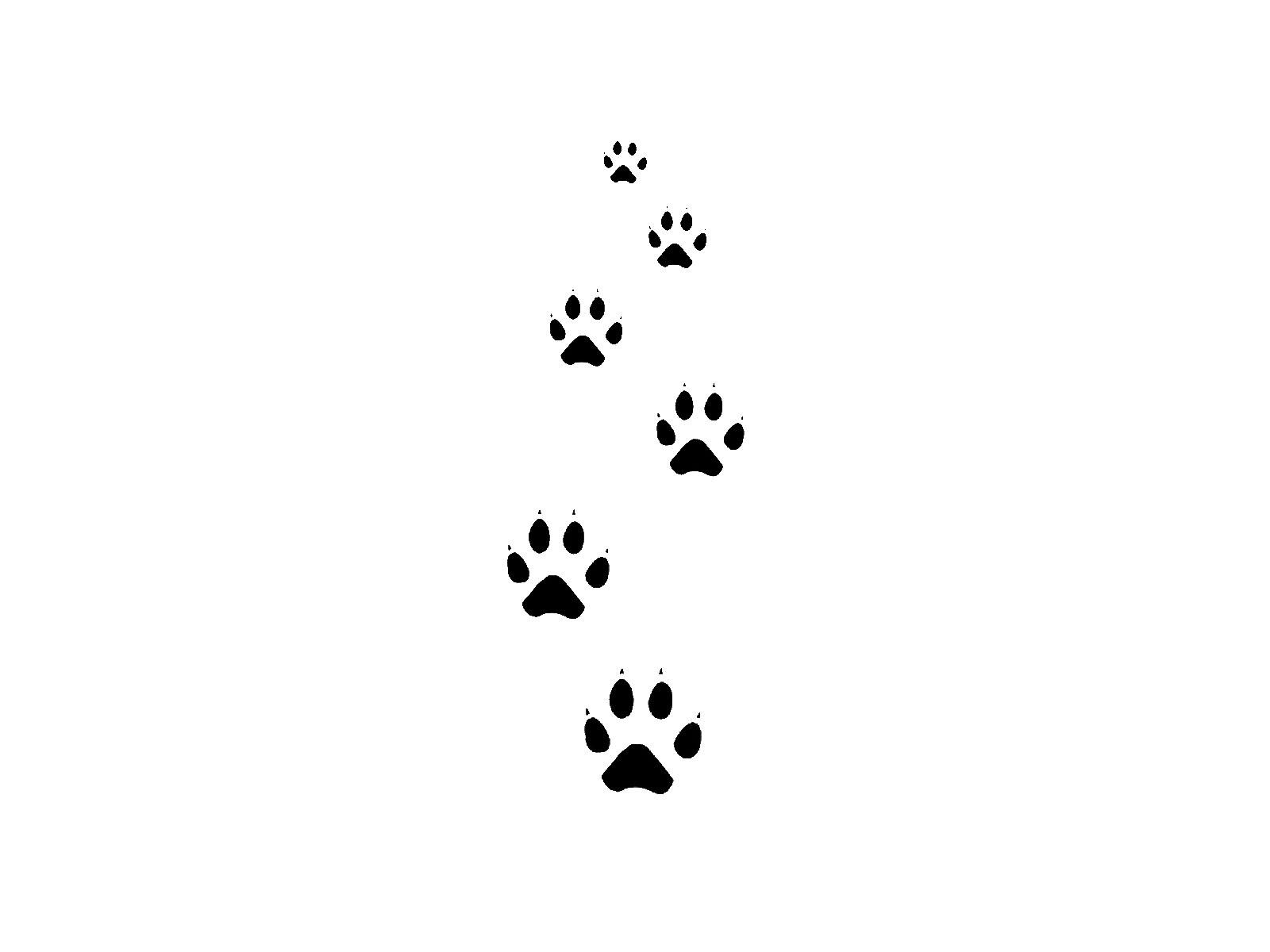 cat images designs