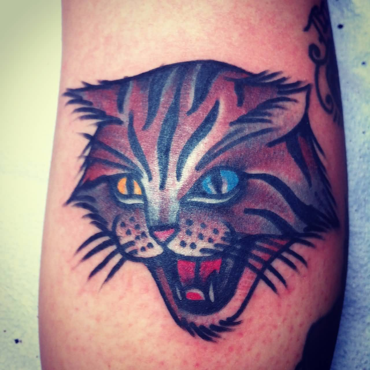 Colored Cat Head Traditional Tattoo By Josh Stephens