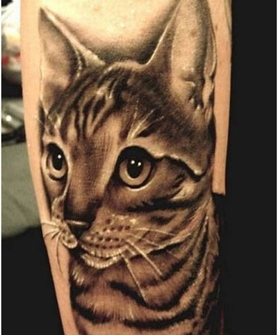 Realistic Grey Cat Tattoo On Sleeve