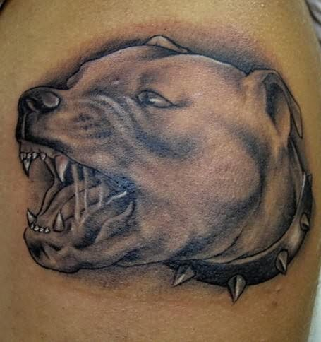 mean pit bull terrier attack tattoo. Black Bedroom Furniture Sets. Home Design Ideas